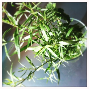fresh tarragon from my food swap