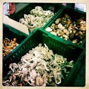 从农贸市场买来的榛子戴尔蘑菇